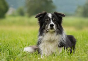 BESTE FREUNDE CLUB - Onlone Hundetraining mit individueller Betreuung