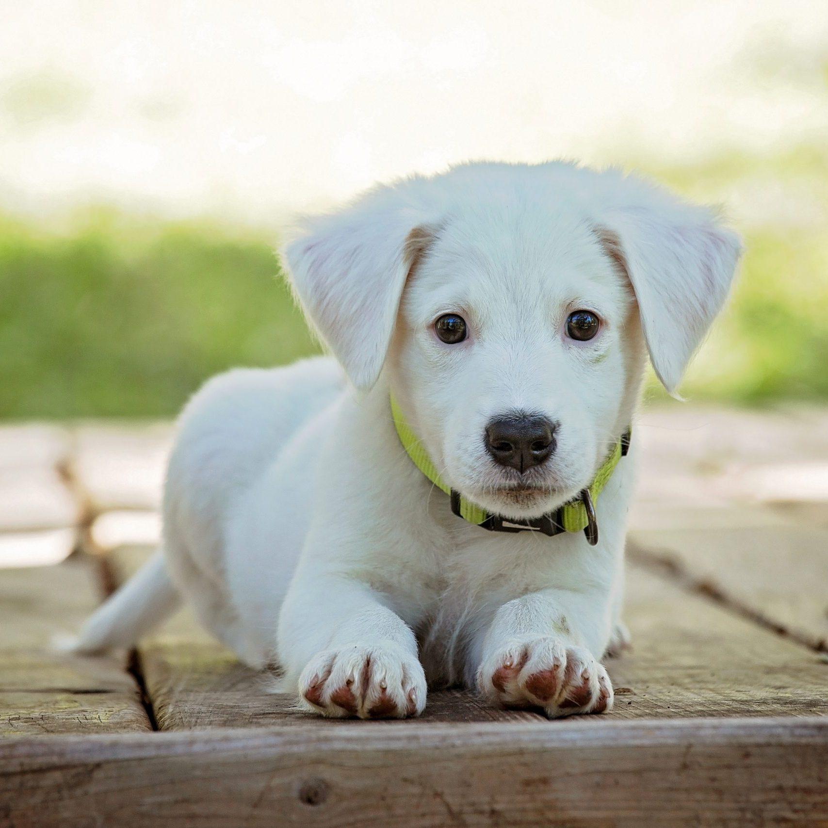 puppy-1903313