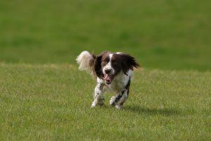 Hundetraining Kassel Alltagstraining