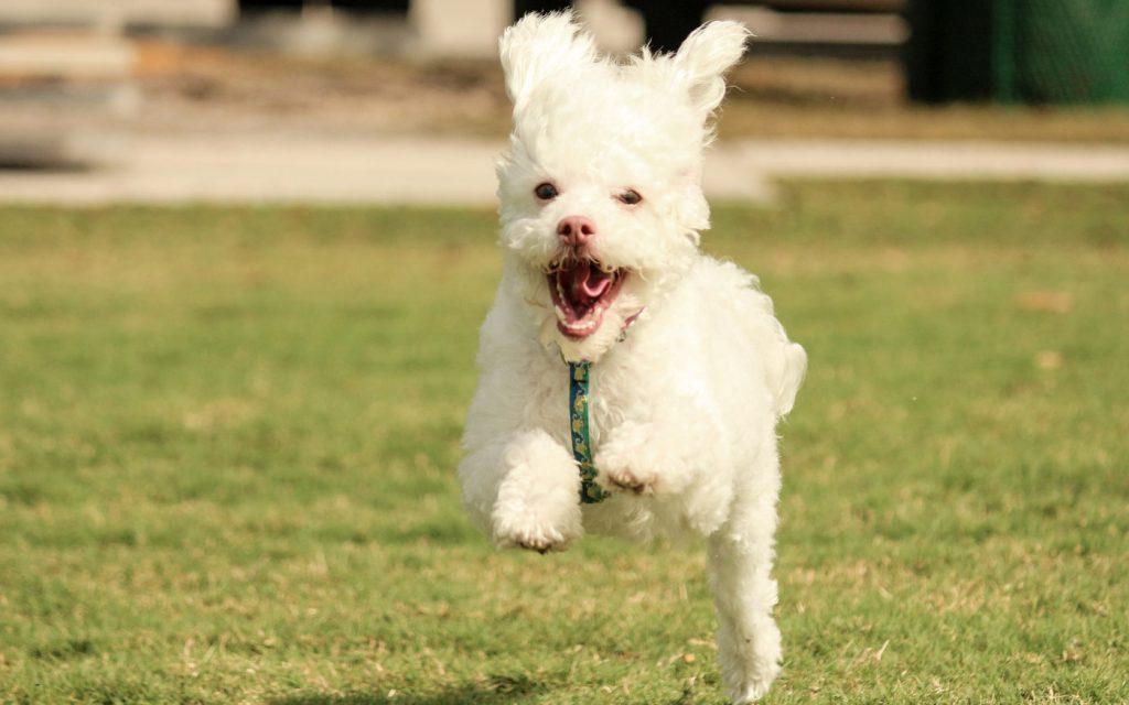 Belohnungsspiele für Hunde: Kegeln