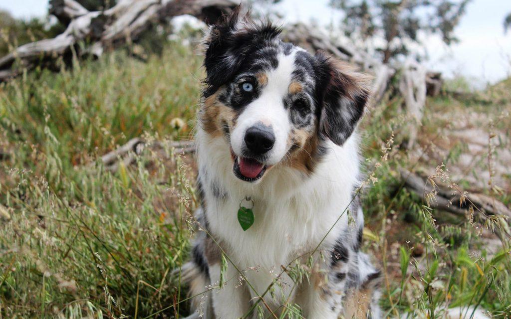 Leinenrambo - Hundebegegnungen Onlinekurs