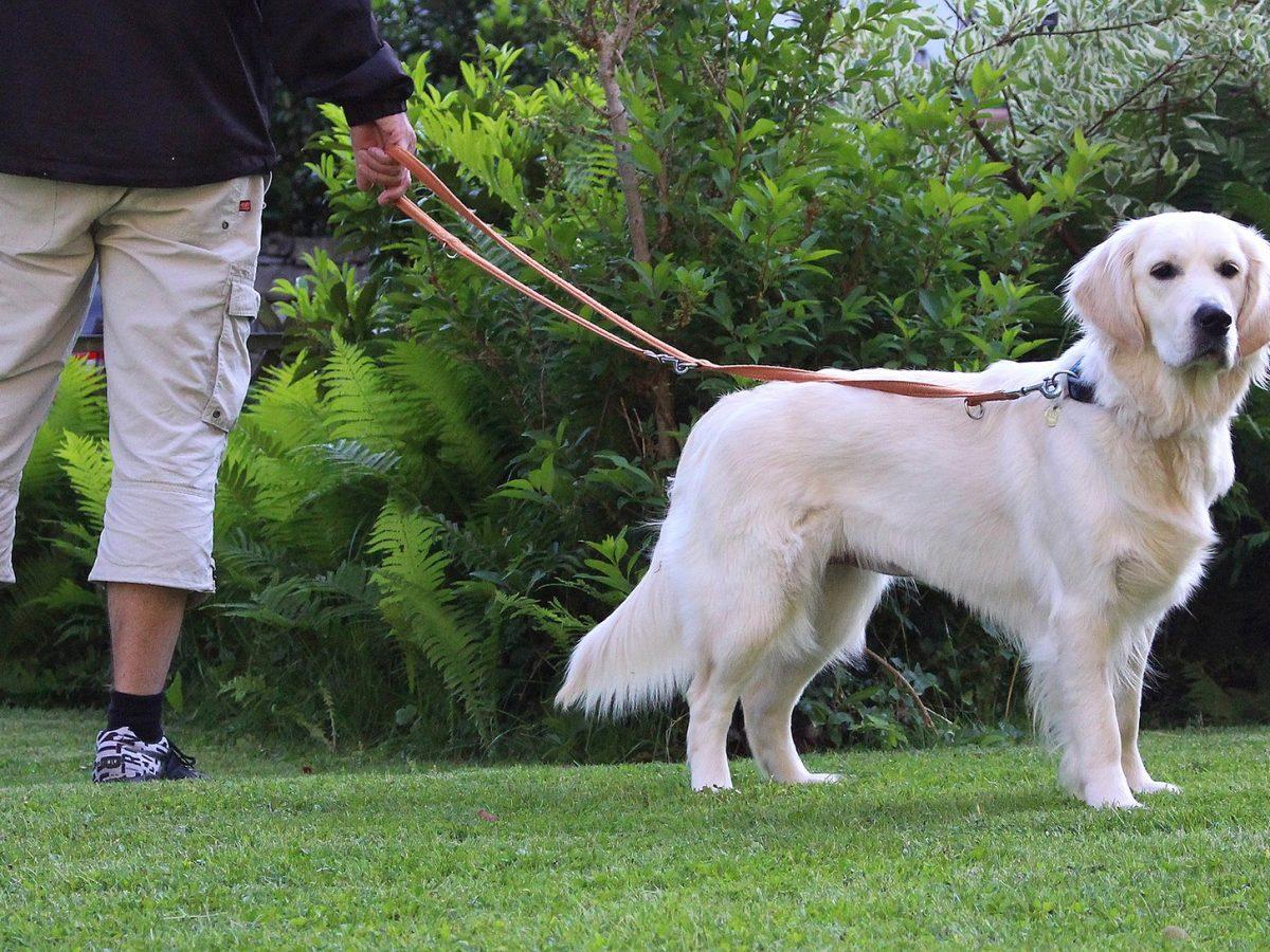 Leinenführigkeit Hund Trainieren Hund