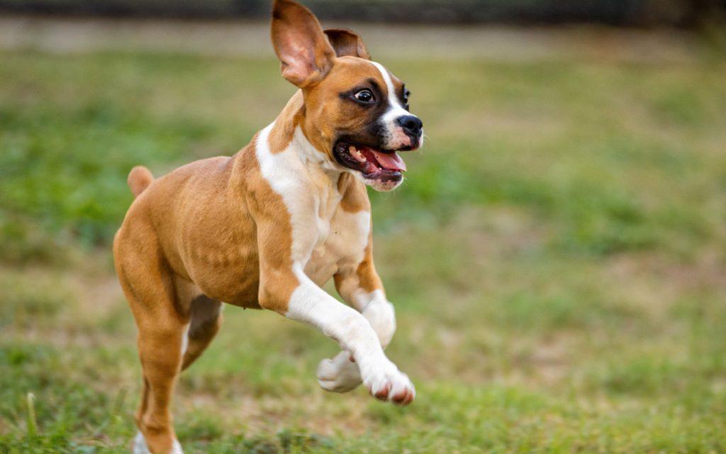Jugendentwicklung Hund - Pupertät & Rüpelphase