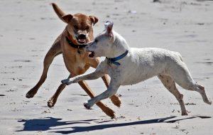 LEINENRAMBO CHALLENGE - Für entpanntere Hundebegegnungen