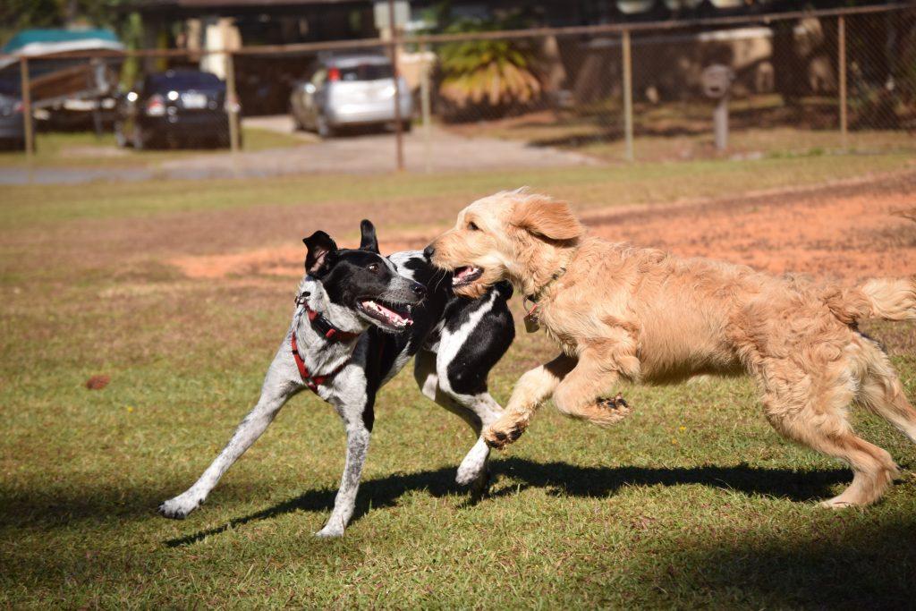Tipps für Rückruftraiing Hund