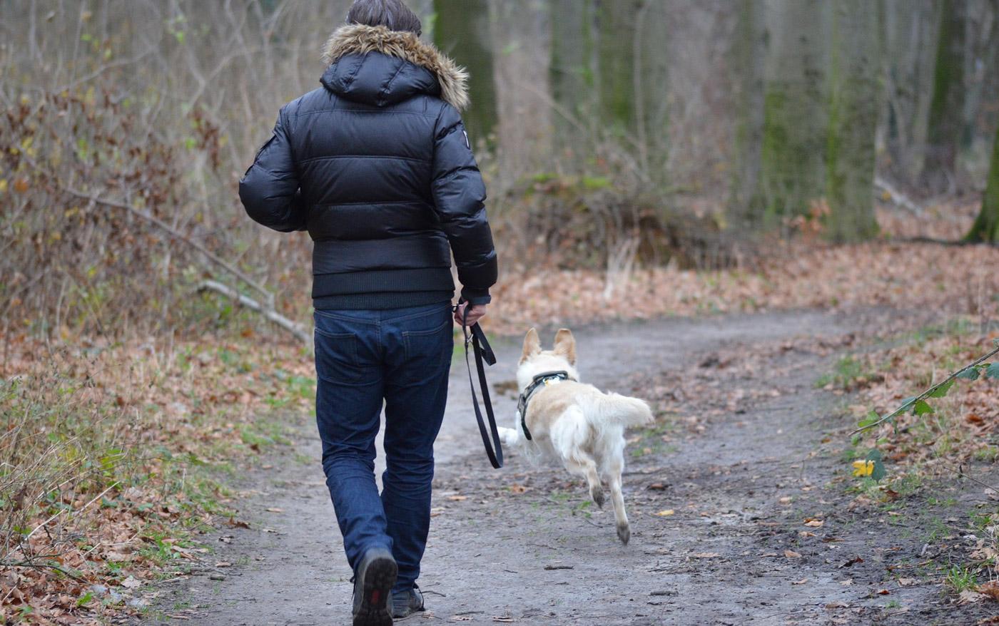 Dein Hund interessiert sich draußen nicht für Dich? Ein paar kleine Tipps…