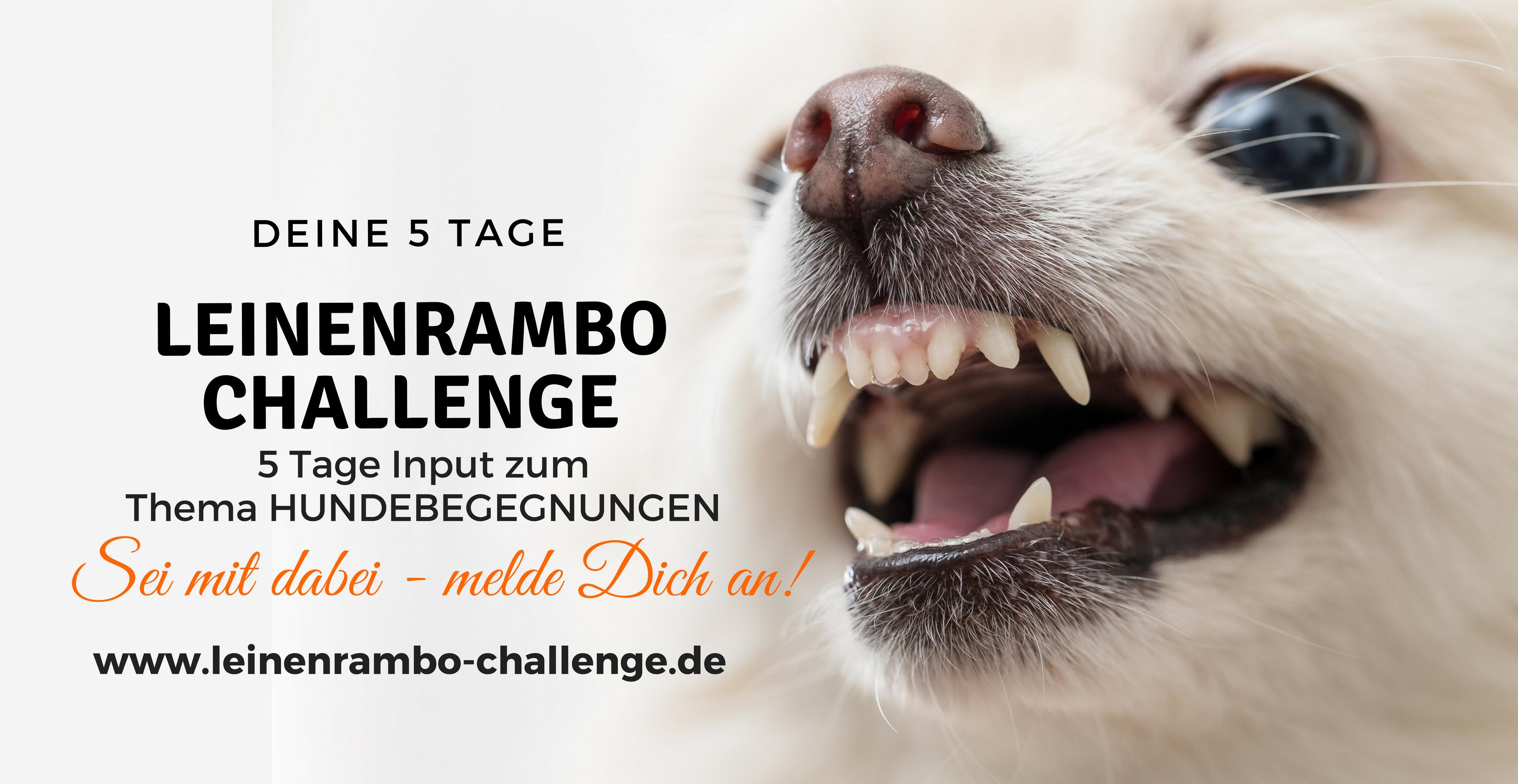 Leinenrambo Challenge - für entspannte Hundebegegnungen