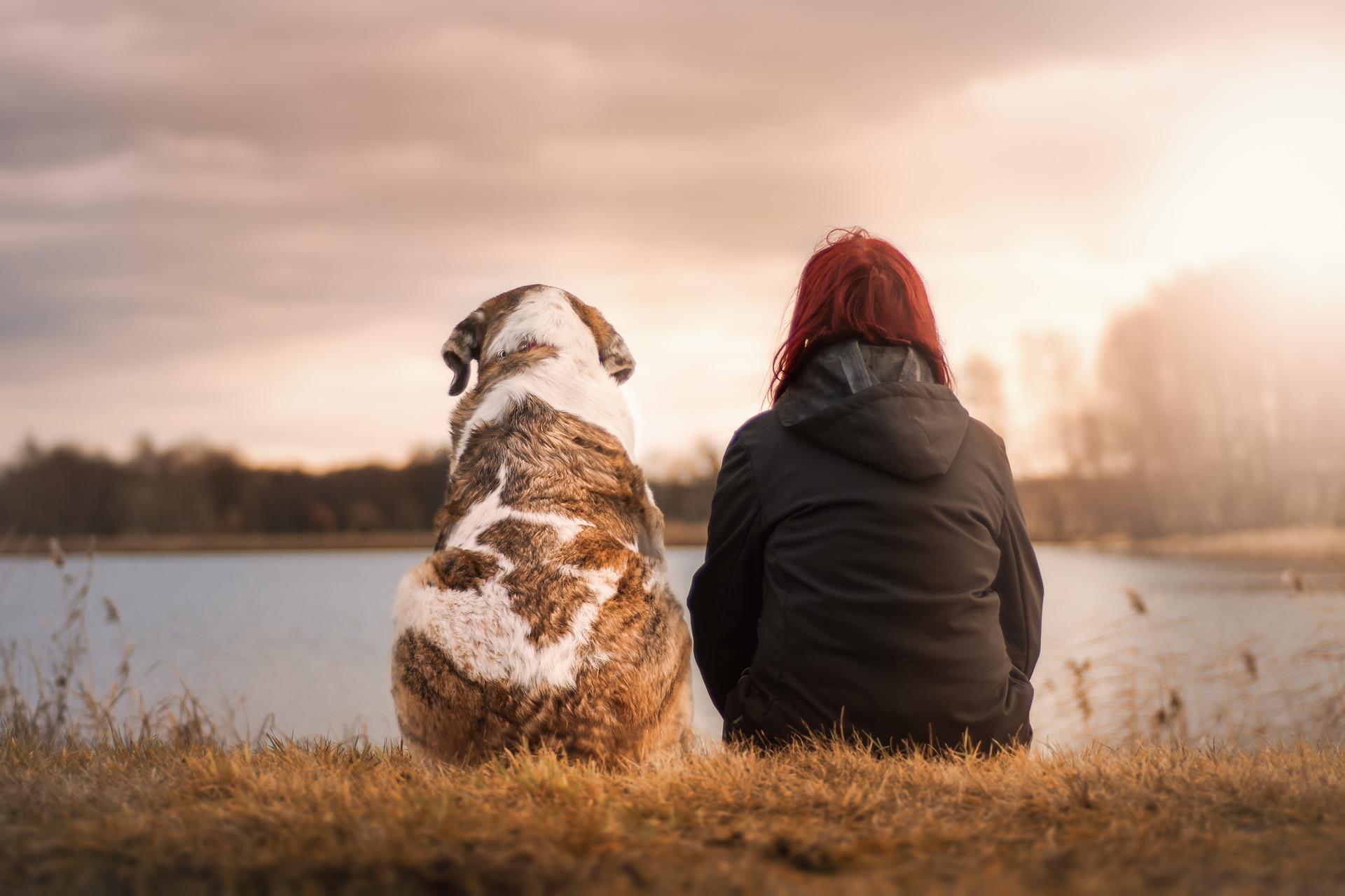 Tipps gute Mensch Hund Beziehung
