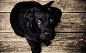 Unangenehme Reize im Hundetraining - Finger weg!