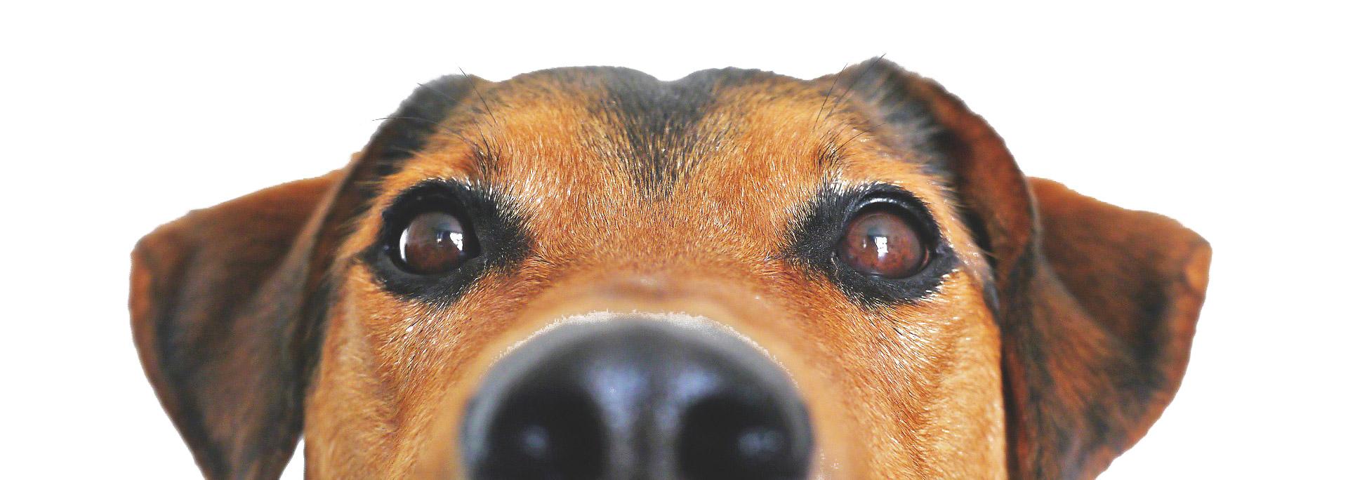Aufmerksamkeitstraining für Deinen Hund