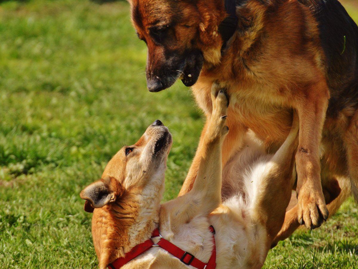 Tipps für Hundebegegnungen & Leinenrambos