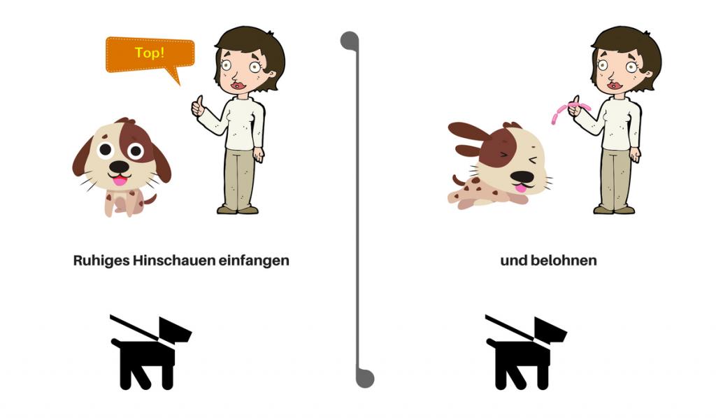 Leinenaggression - Training Hundebegegnungen - Click für Blick