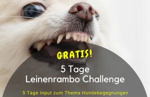 Leinerambo Challenge - für ruhigere Hundebegegnungen