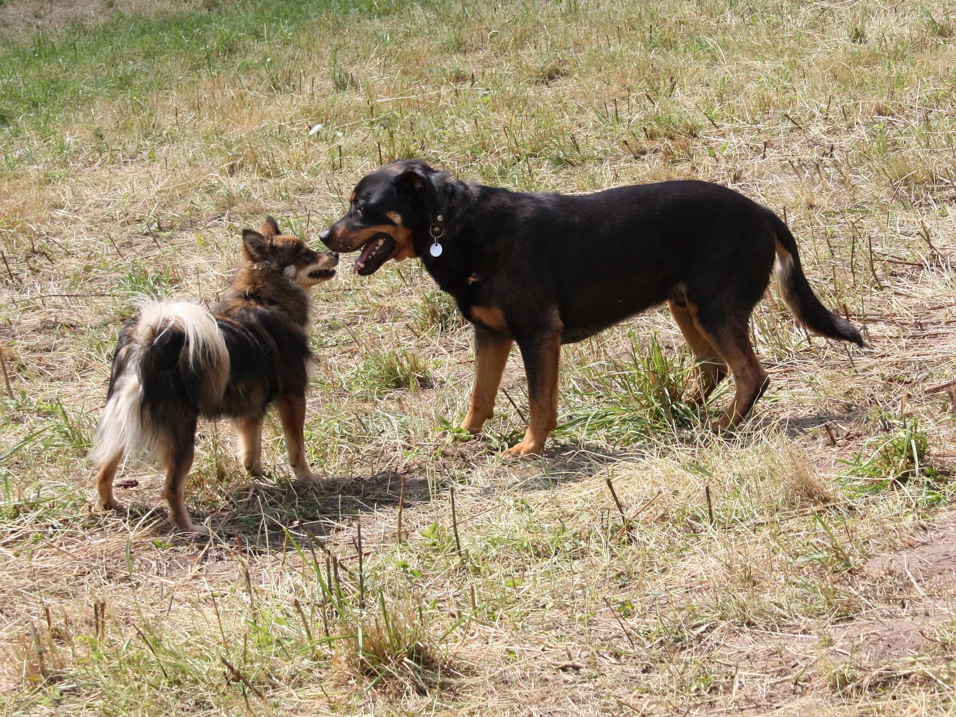 Hilfe, ein Hund kommt - Hundebegegnungen meistern