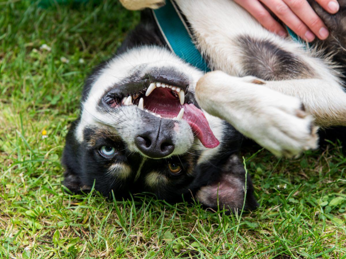 Hibbelhunde Trainingstipps