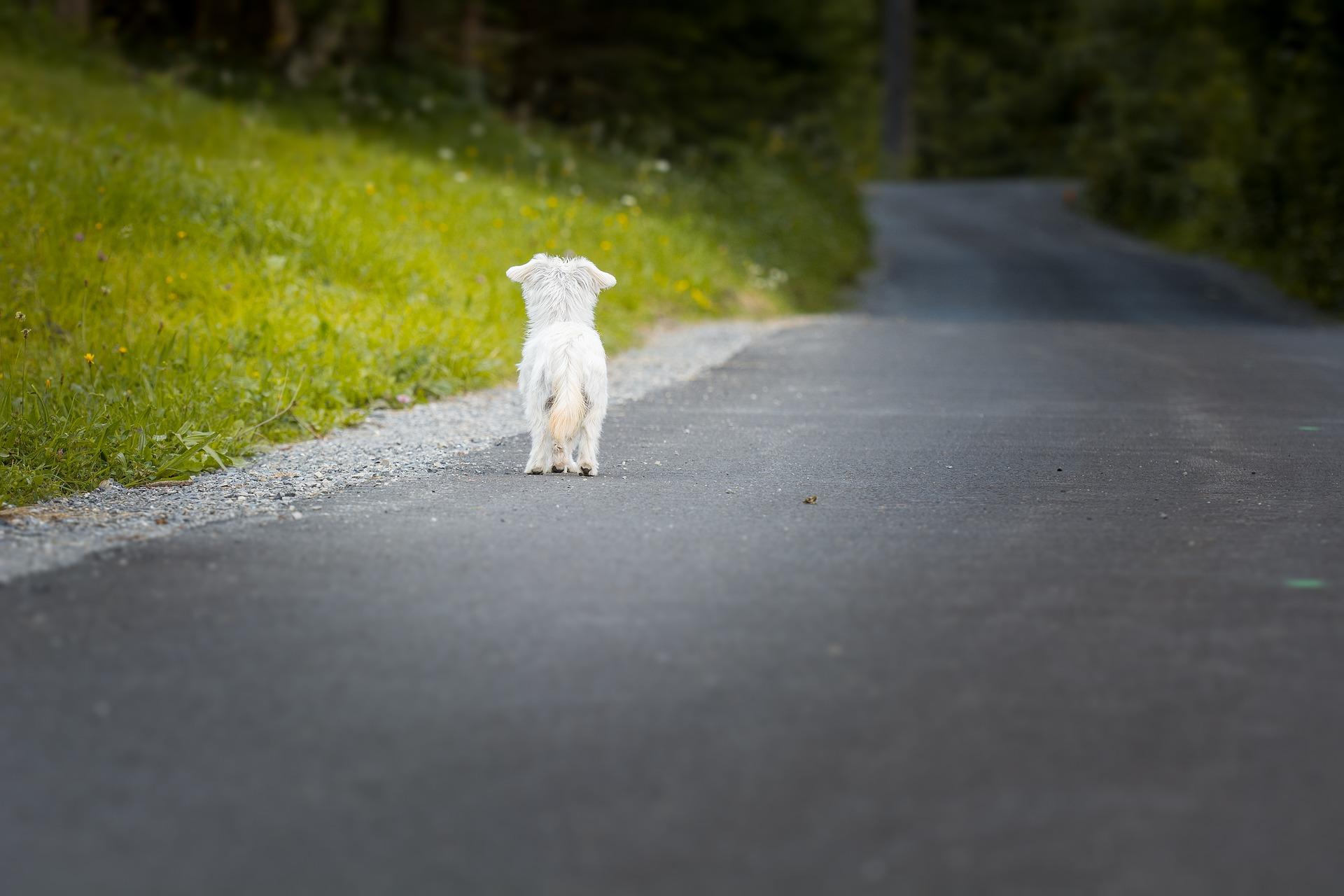 Hund Angst - Tipps zum Helfen