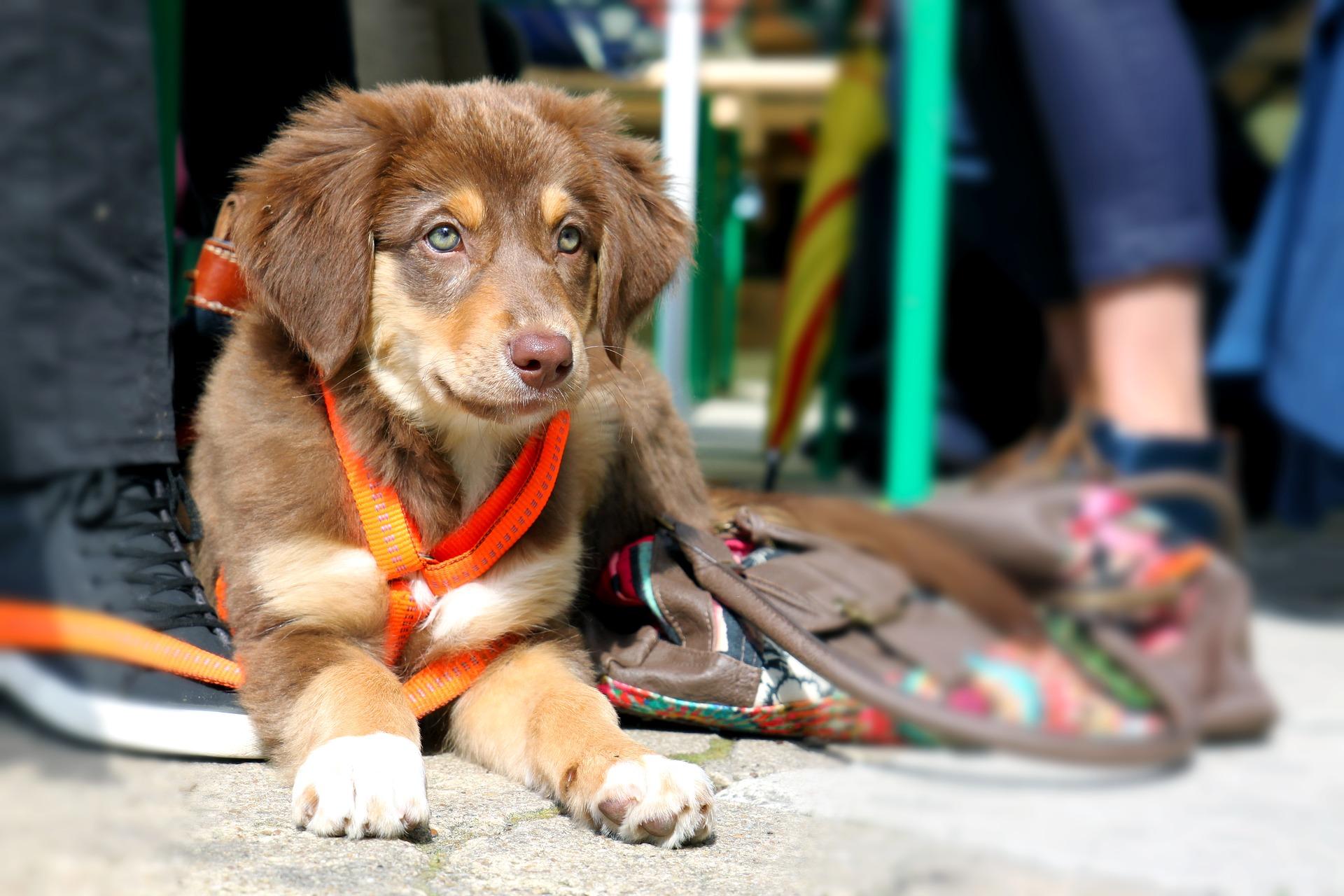 Woran Du eine gute Hundeschule erkennst