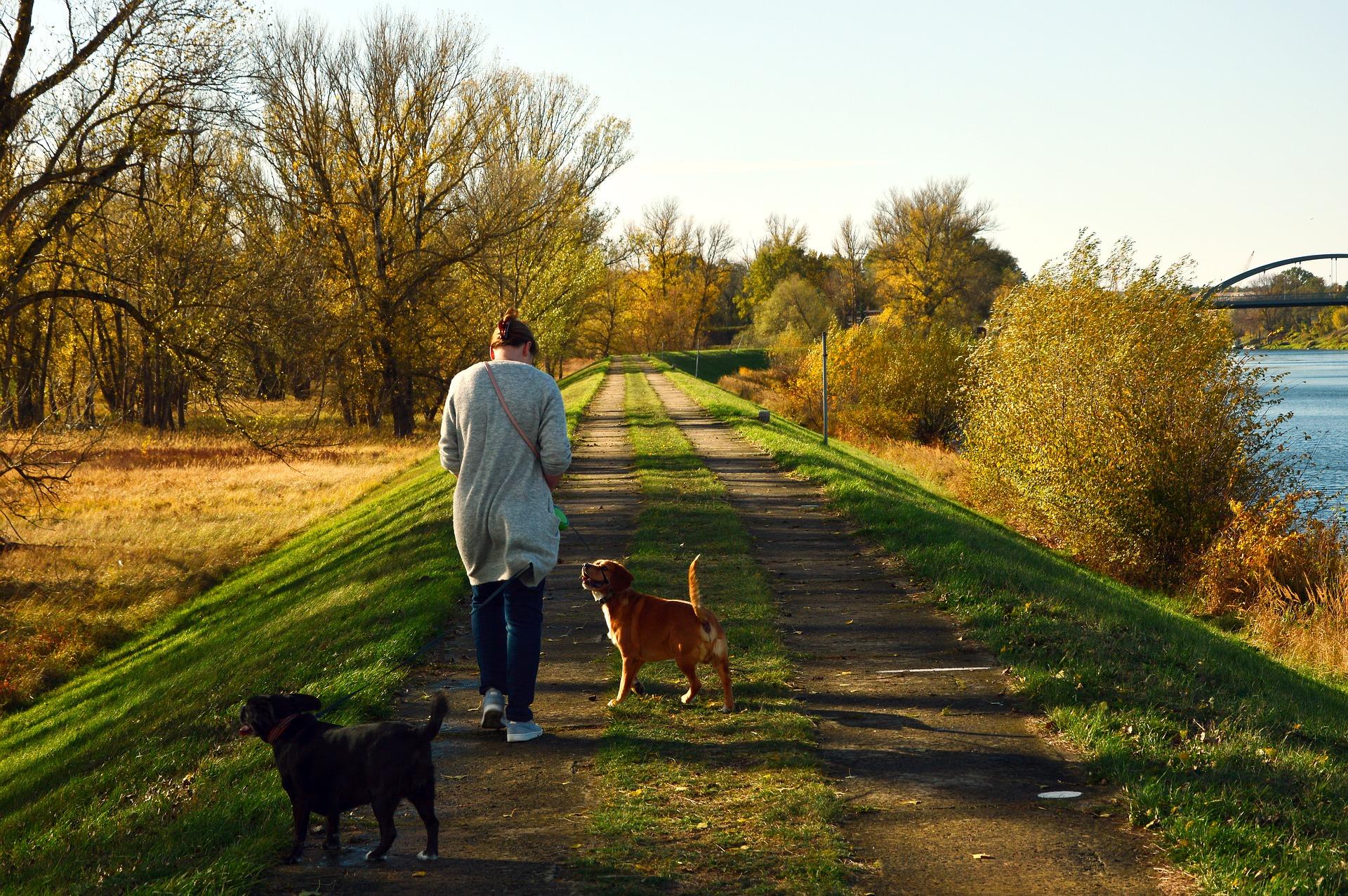 Rückruftraining - Tipps für Rückruf Hund