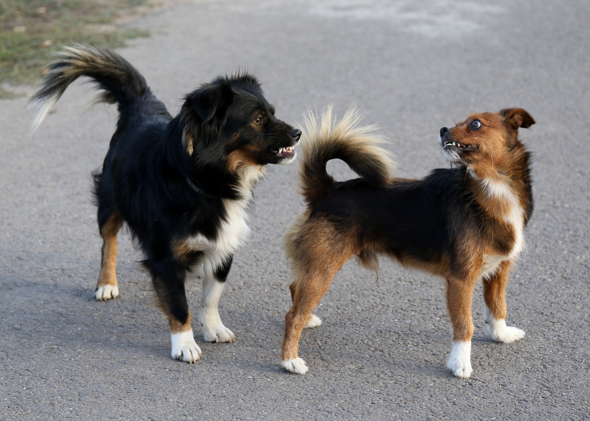 Meiner tut nix - Hundebegegnungen