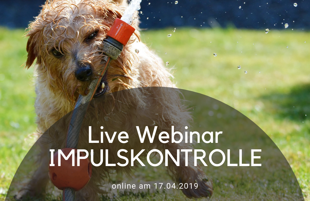 Impulskontrolle - Online Webinar