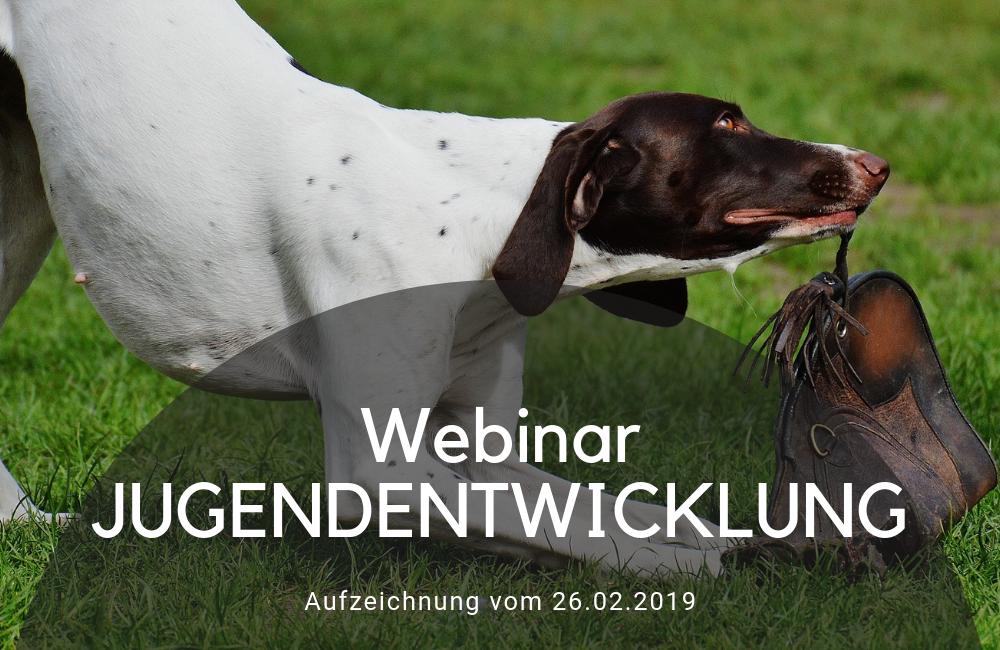 Jugendentwicklung - Online Webinar