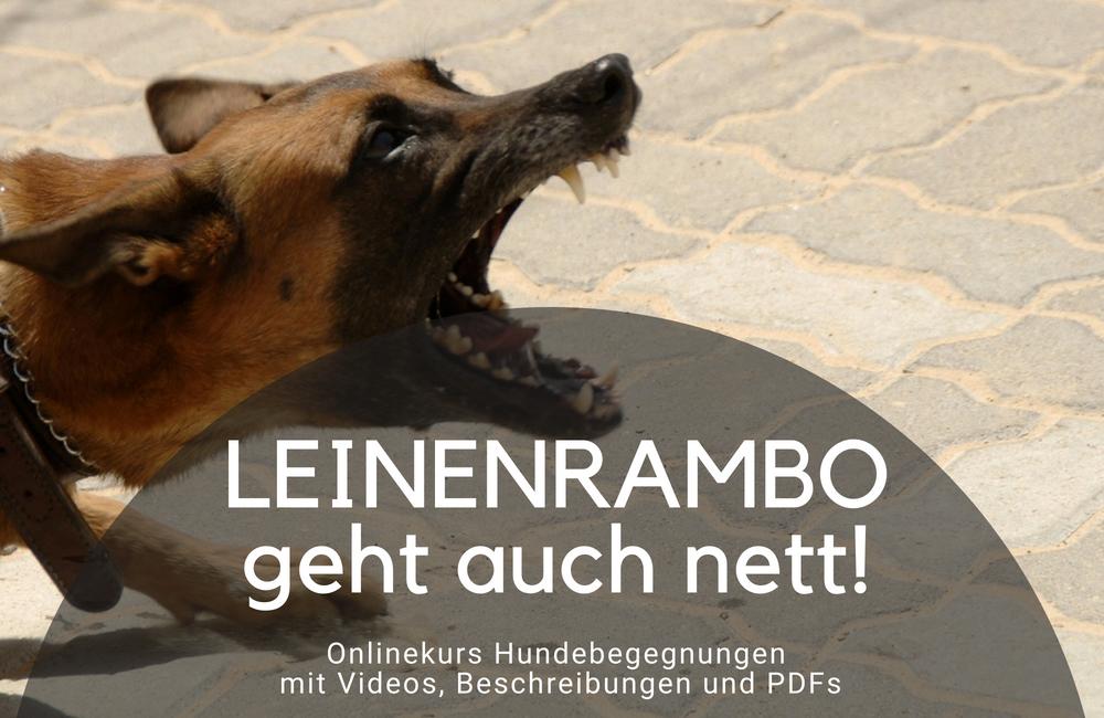 Leinenrambo Leinenaggression Hundebegegnungen - Onlinekurs