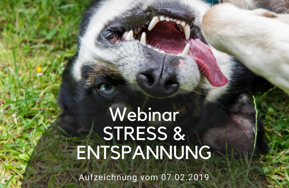 Stress & Entspannung - Online Webinar