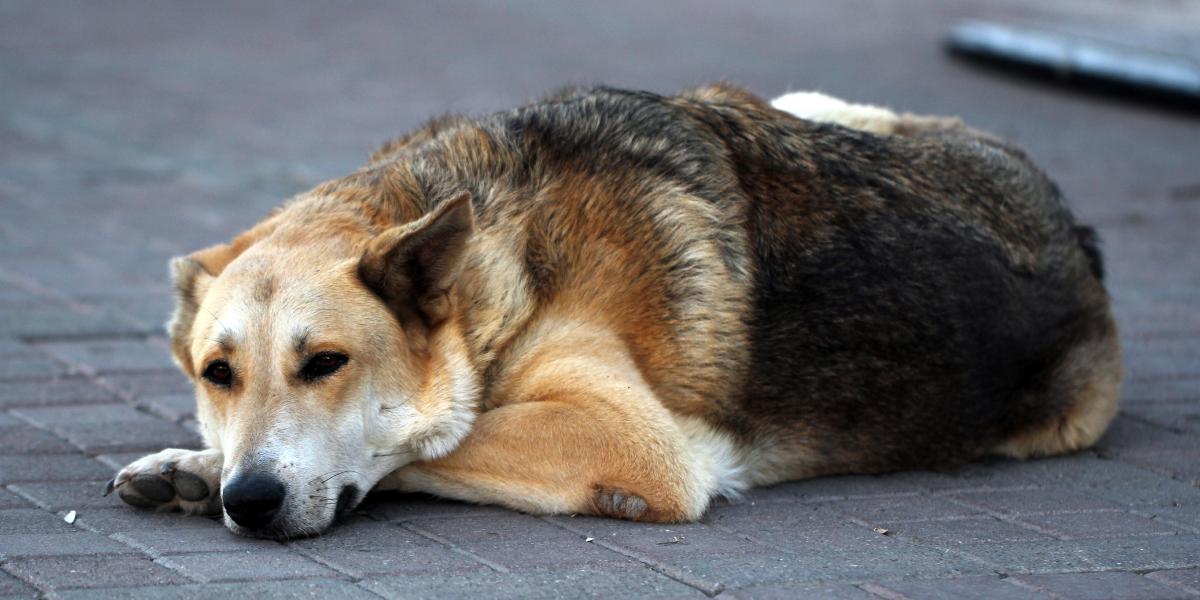 Der Hund aus dem Tierschutz