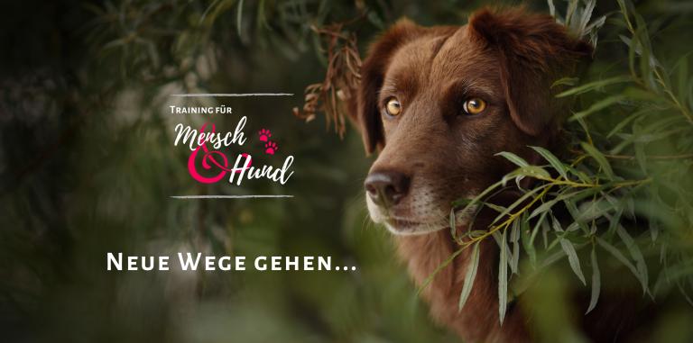 Neue Wege gehen... Kostenloses Intensivprogramm für Dich und Deinen Hund