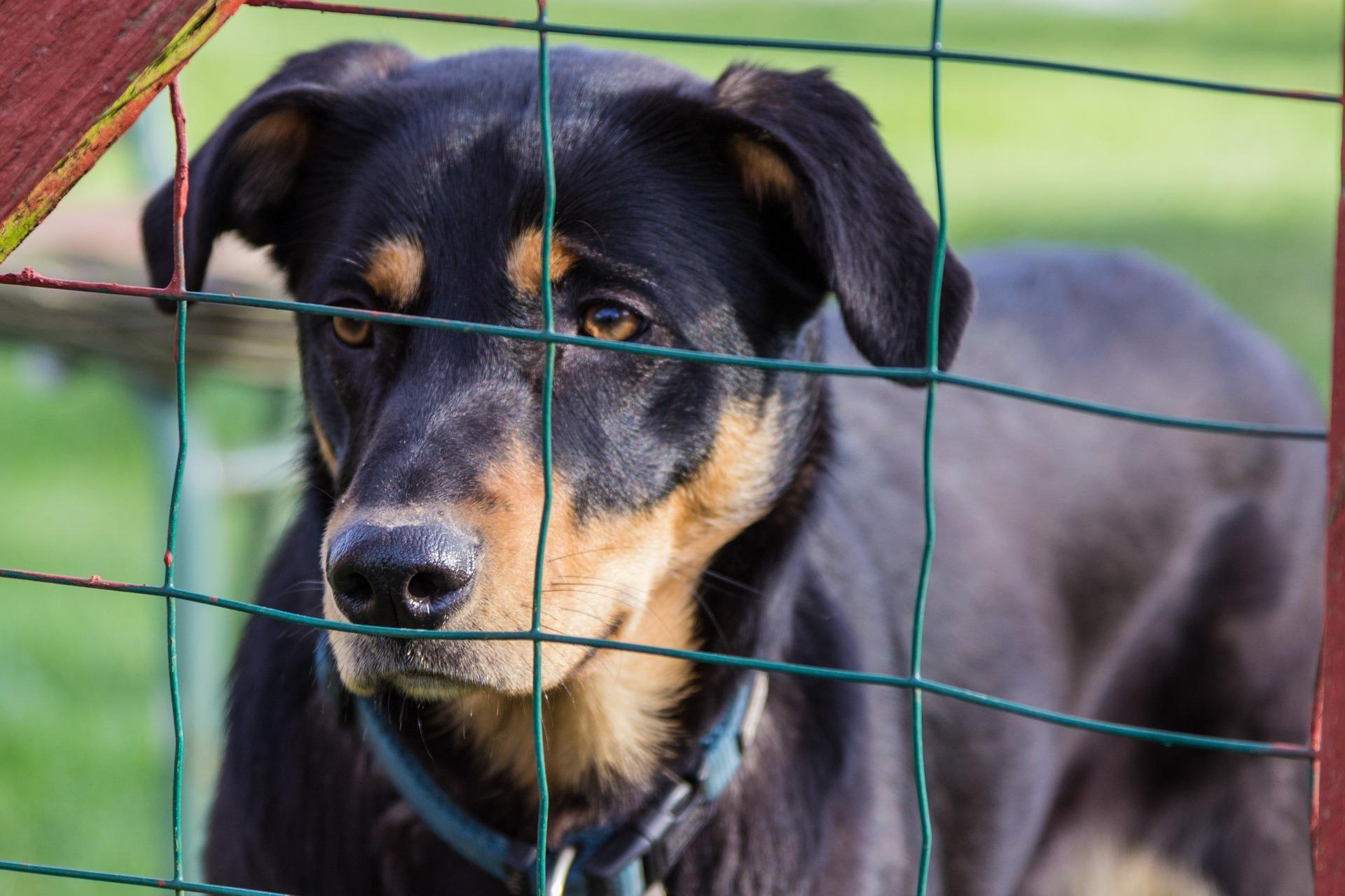 Grenzen setzen im Hundetraining