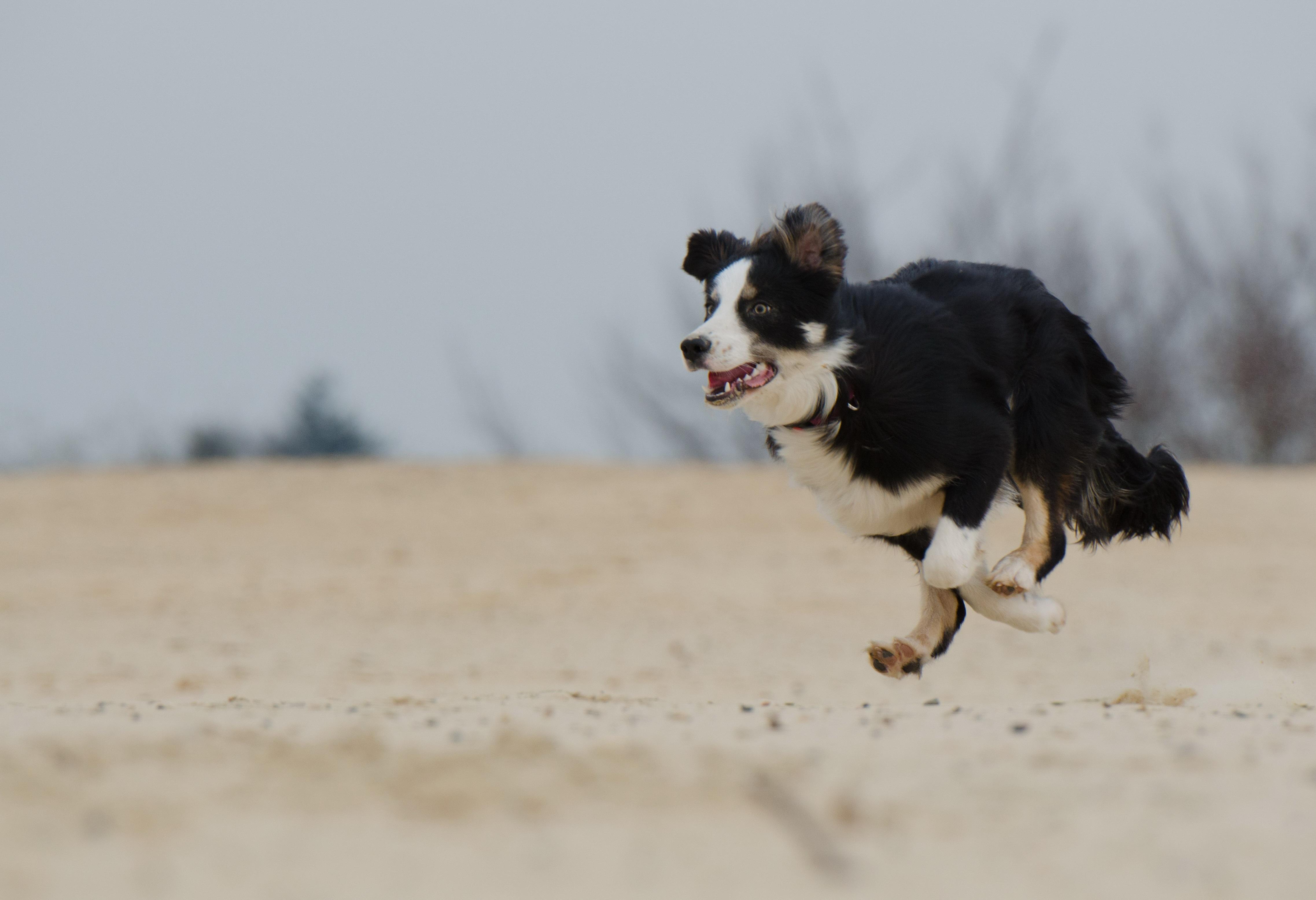 U-Turn Hund - Trainingsaufbau