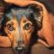 Warum Du Deinen Hund bei Angst trösten solltest!