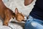 Umgang mit unerwünschtem Verhalten beim Hund