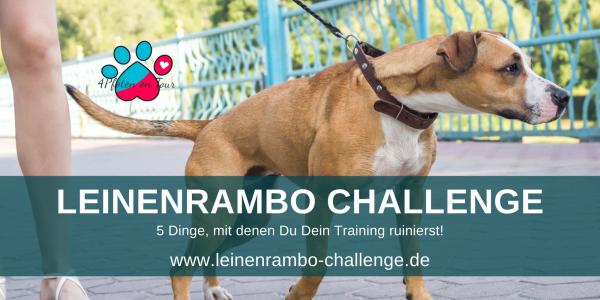 Leinenaggression Training Hundebegegnungen