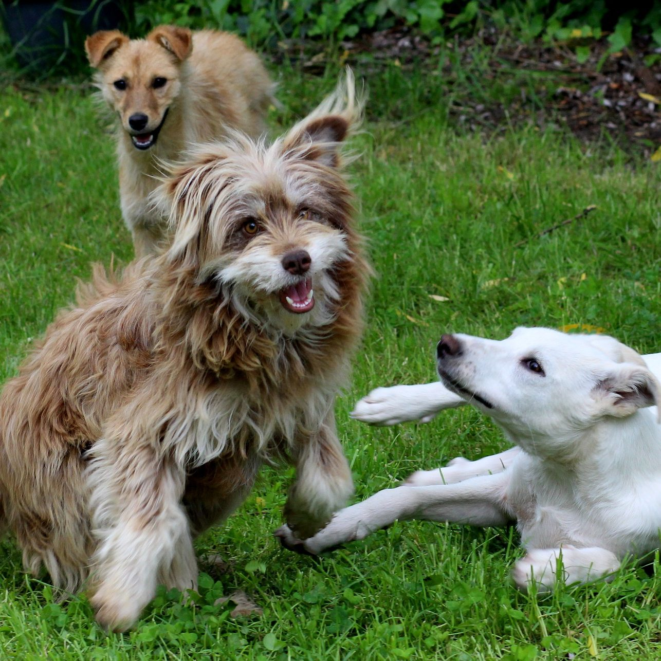 dogs-2334043_1920