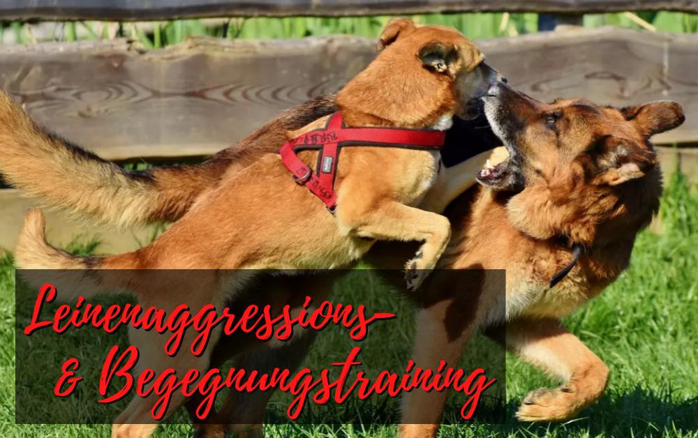 Junghundekurs - Leinenaggression - Begegnungstraining