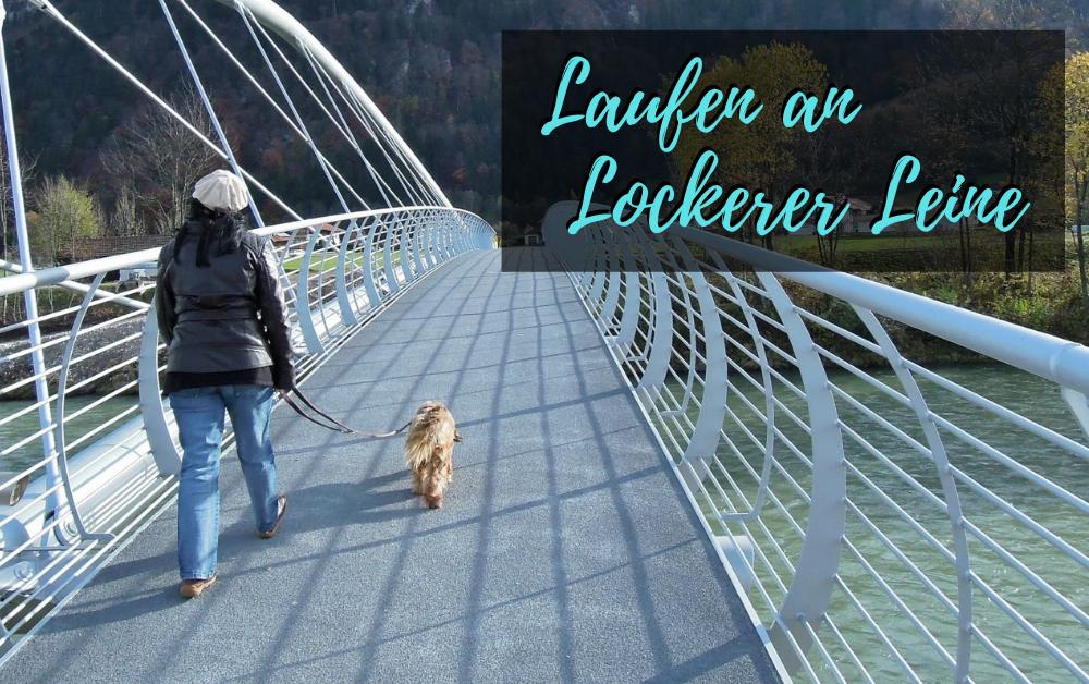Leinenführigkeit Baunatal Kassel - Laufen an lockerer Leine