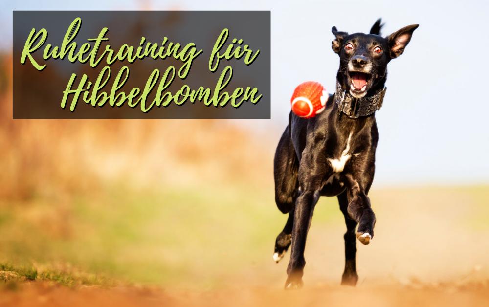 Ruhetraining für junge Hunde und Hibbelbomben