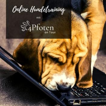 Online HUndetraining Kurse